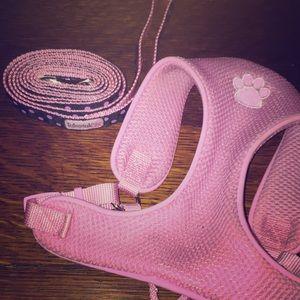 A dog leash and harness.